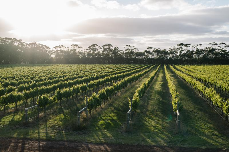 Location shot of the vineyard at real bride Jess' Perth wedding
